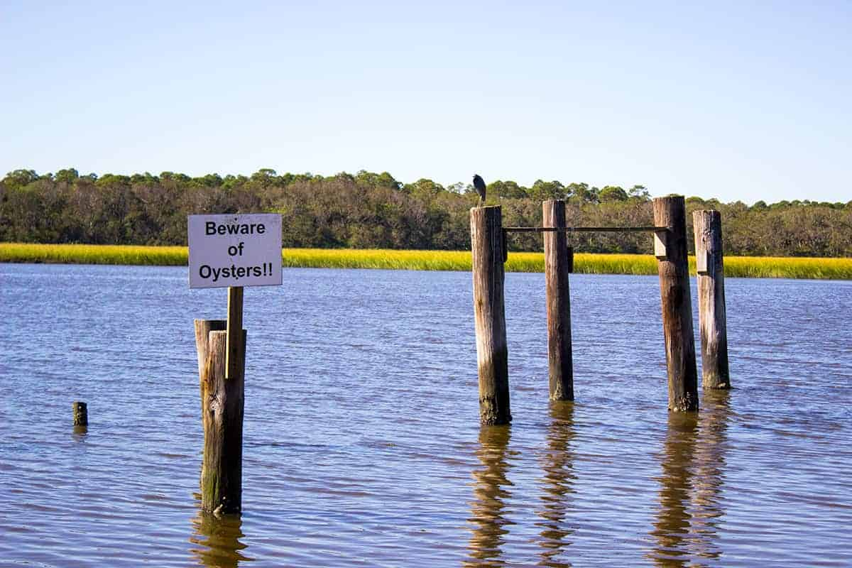 Beware of Oysters signage by Kayak Amelia in Jacksonville Florida