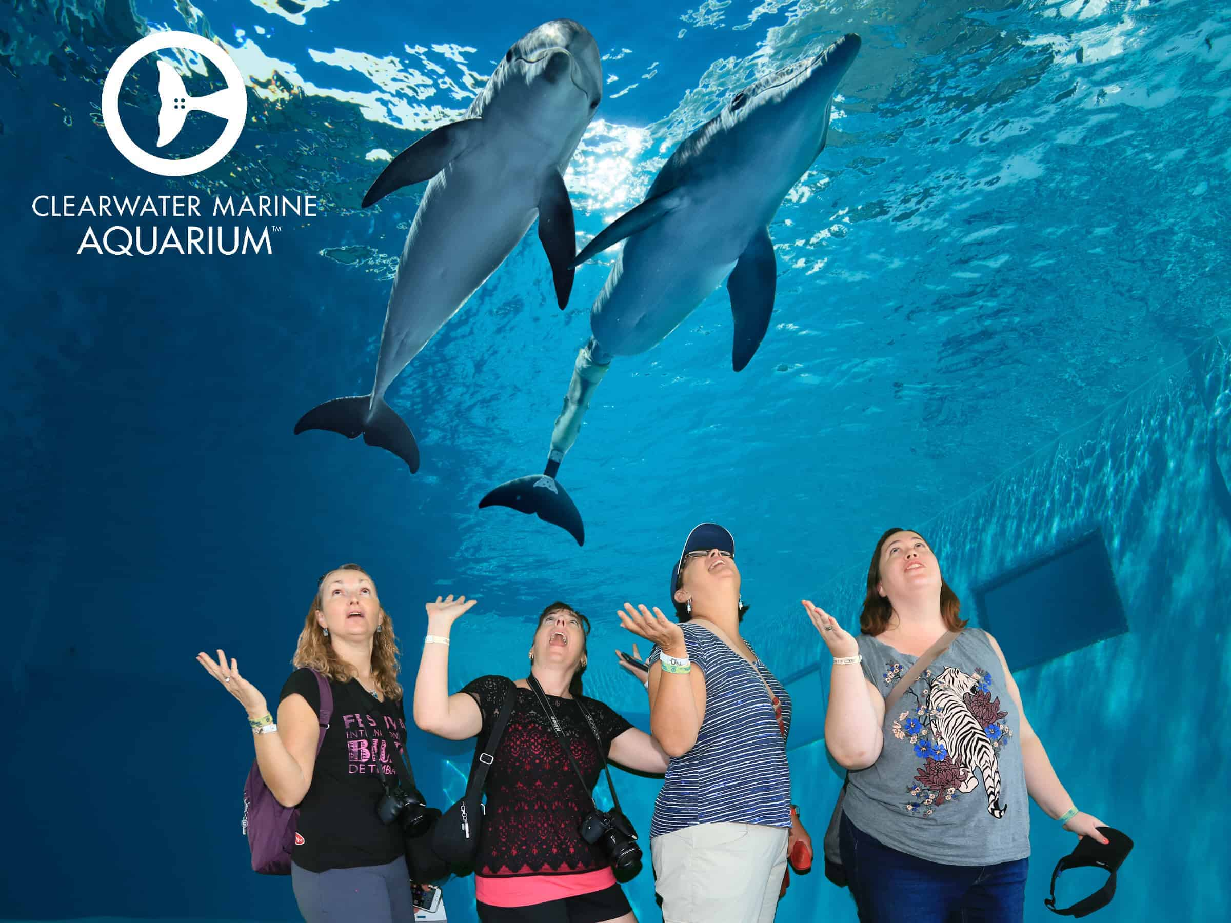 Clearwater Marine Aquarium Group Photos